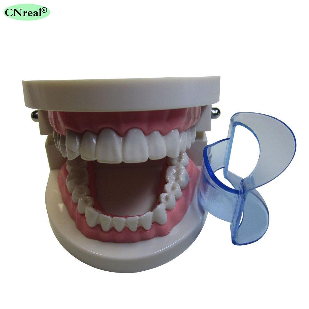 25 sztuk / partia Dental Lip Zwijacz Policzek Expander Usta Otwieracz - Hygiena jamy ustnej - Zdjęcie 3