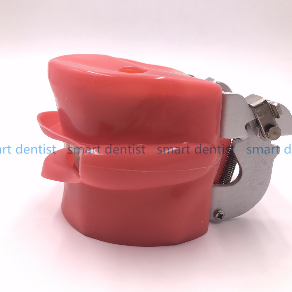 Good Quality Oral Simulation Practice System Dental Phantom Head for Dental School - 4
