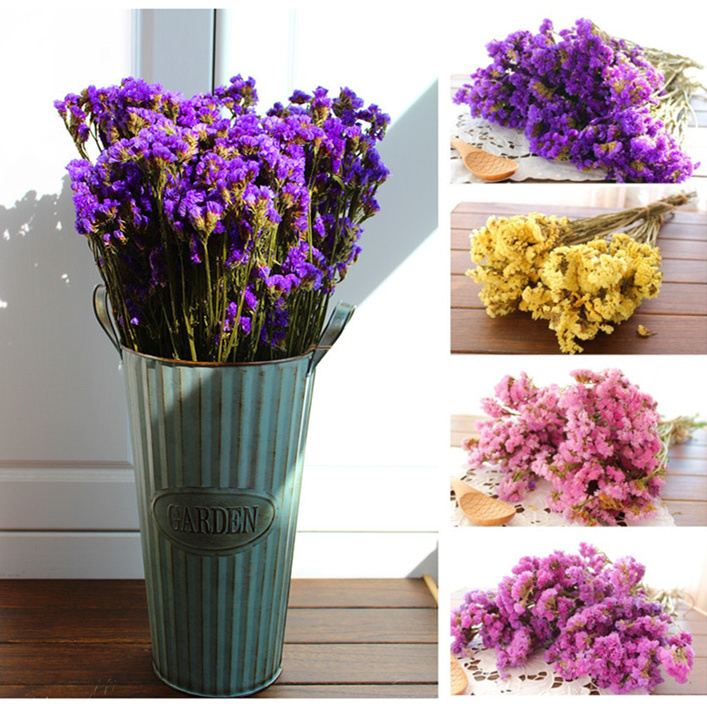 1 pack (no vase) Natural Dried Flower Myosotis Sylvatica Bouquet Home Decoration Flowers from Yunnan Free shipping
