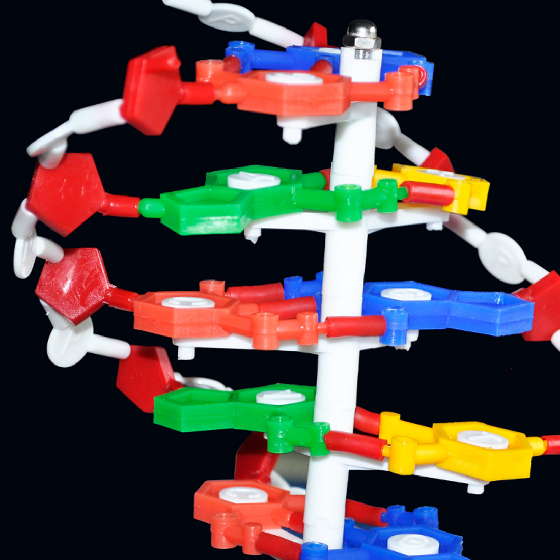 Outils pédagogiques de biologie Surwish modèle de Structure d'adn accessoires éducatifs équipement d'étude d'adn-L - 6