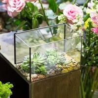 Indoor Flowerpot Rectangle Geometric Terrarium Planter for Succulents Tabletop Succulent Plant Pot Bonsai Home Garden Decorative