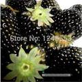 Promotion!!! 600 pcs/ 24 kinds strawberry seeds green black blue orange white red pink + rose seeds for gifts, Bonsai, DIY