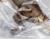 2016 Papo Novo Baryonyx O Mais Clássico Brinquedo Animal Simulação de Criaturas Antigas Coleção Dinossauro Parque