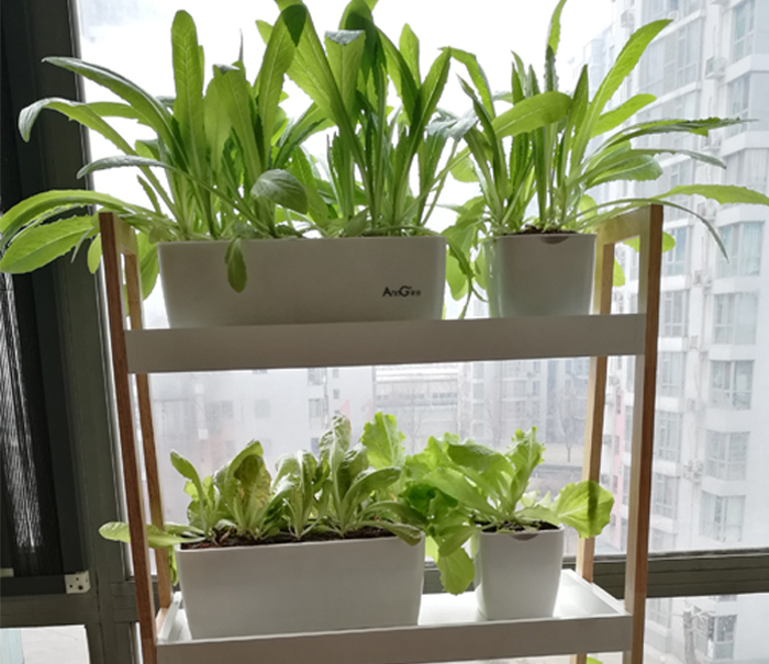 US $19 14 36% OFF|Hydroponics Design Sky Garden DIY Grow vegetables in  house or balcony Hydroponics system without earth assemble sets-in Flower  Pots