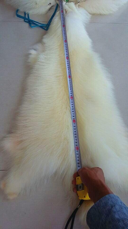 Véritable peau de peau de raton laveur blanc naturel tannée véritable/fourrure de bronzage de raton laveur avec avantage - 2