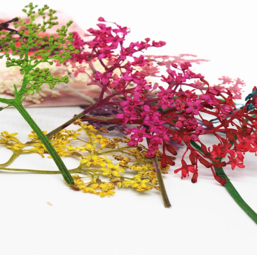 120pcs Dried Flower Preserved adnate elder herb For Epoxy Resin Jewelry Making Postcard Frame Phone Case Craft DIY in Artificial Dried Flowers from Home Garden