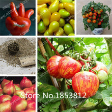 Sale!300 piece 16 Colors Tomato Seeds 2016 New Garden Flowers Four Season Sowing Fruit Seeds Garden