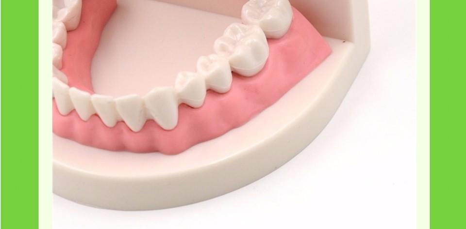 Teeth Model0000009