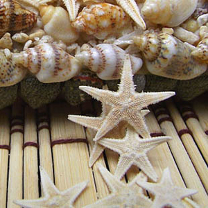 HappyKiss 50pcs Natural Sea Star Wishing Bottle Starfish DIY Wall Stickers Adornment Material SIZE:1cm-2cm Free Shipping