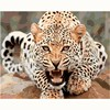 No Frame Leopard DIY Animal Painting By Numbers Canvas Painting Print On Canvas Unique Gift Home