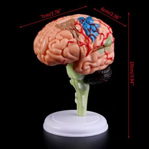 Image 5 - 4D Disassembled Anatomical Human Brain Model Anatomy Medical Teaching Tool Statues Sculptures Medical School Use