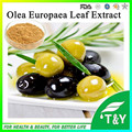 Super Antioxidant Olive Leaf Extract 5~80% Hydroxytyrosol