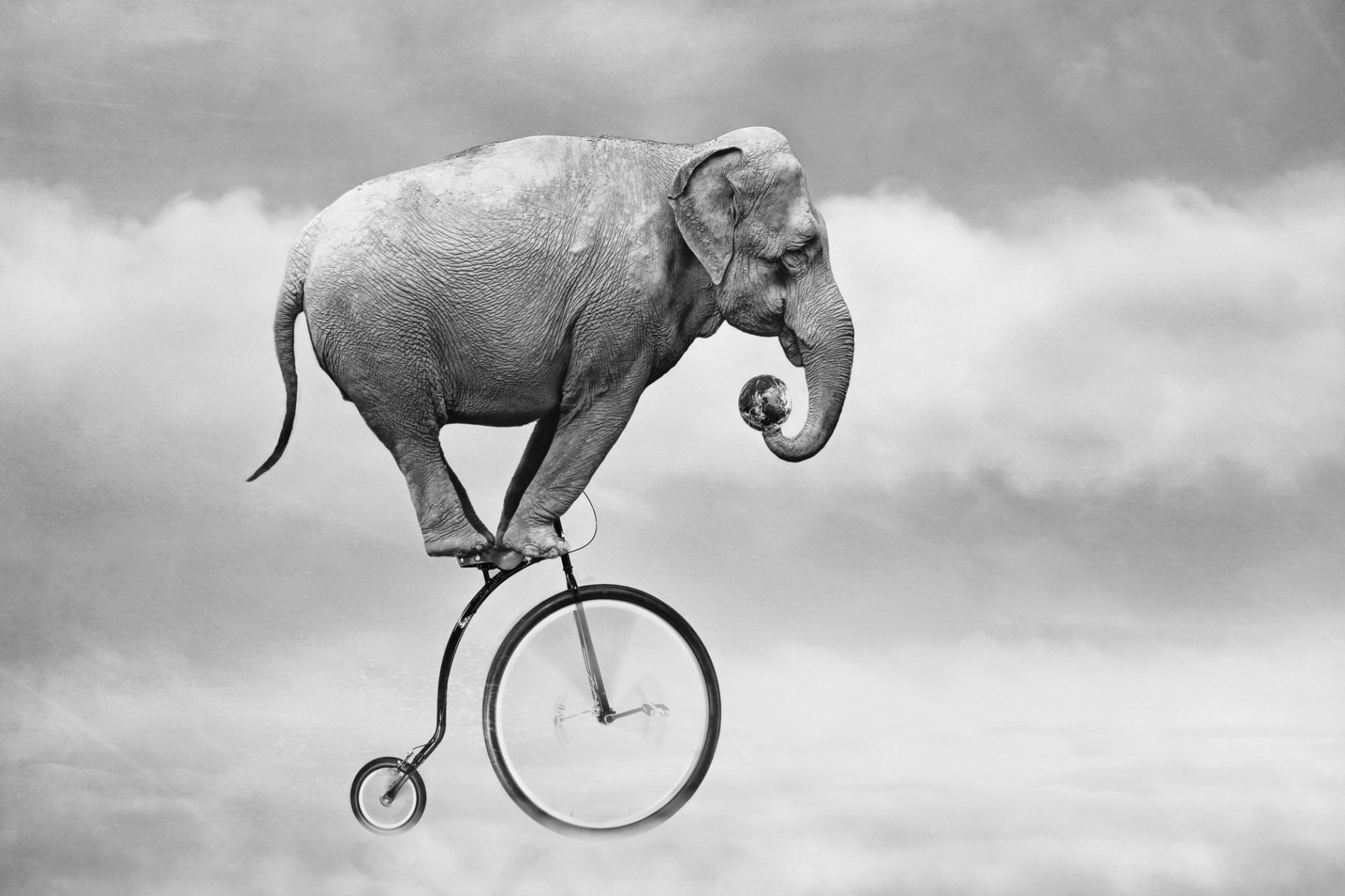 Black and white elephant Bicycle sky animal fantasy living room home ...