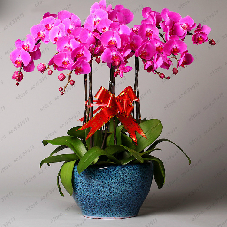 Indoor flowering plants with names images galleries with a bite - Indoor plants with names ...