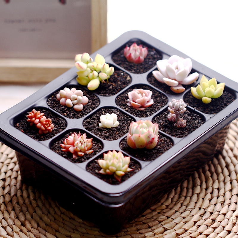 5 Sets Seed Trays Plant Germination Kit Grow Starting Durable Plastic with Humidity Dome and Base 60 Cells Nursery Pots bonsai