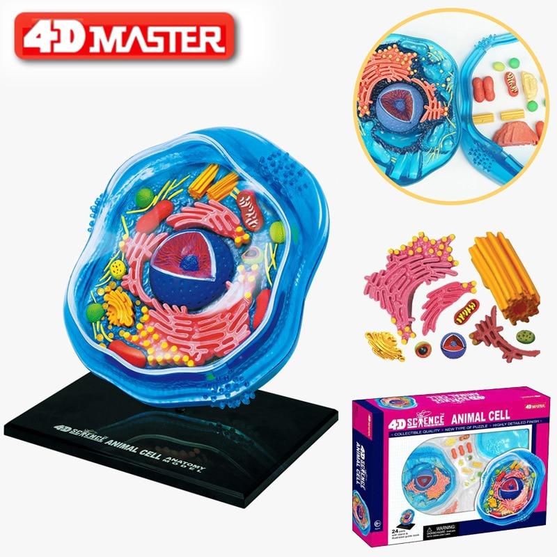 4D Animal Cells Intelligence Assembling Toy HumanOrgan Anatomy Model Medical Teaching DIY Popular Science Appliances