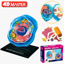 4D Animal cells Intelligence Assembling Toy HumanOrgan Anatomy Model Medical Teaching DIY Popular Science Appliances цена в Москве и Питере