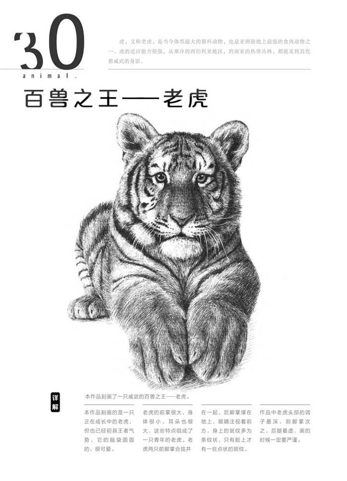 Hewan Harimau Singa Kucing Leopard Teknik Art Buku Sketsa Edisi