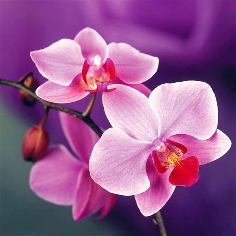 Для выращивания дома, на балконе офисные редкая Орхидея бонсаи Орхидея фаленопсис горшок для карликового дерева Новое поступление DIY садовые растения цветы бонсай 20 штук