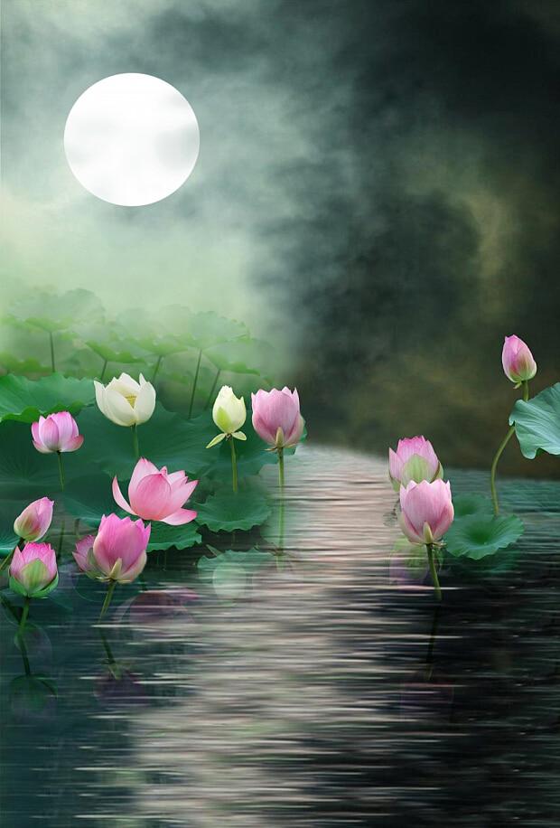 Free Shipping Fantasy Moonlight Scenic Lotus Photography