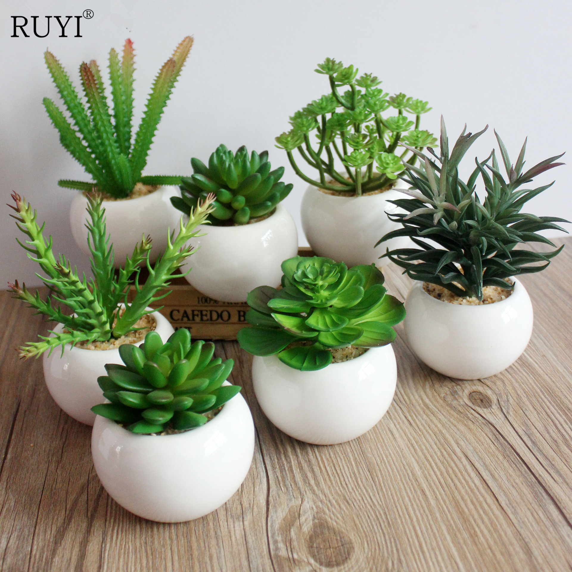 Cheap Bulk Succulents