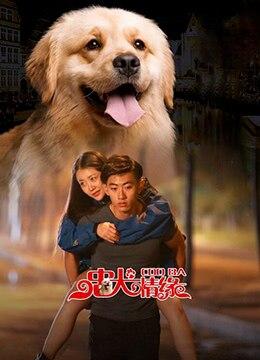 《忠犬情缘》2016年中国大陆剧情,喜剧,爱情电影在线观看