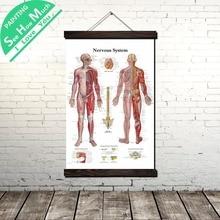 Лучший!  Тело Скелетная Система Scroll Живопись Холст Старинные Плакат и Отпечатки Wall Art Pictures Гостиная