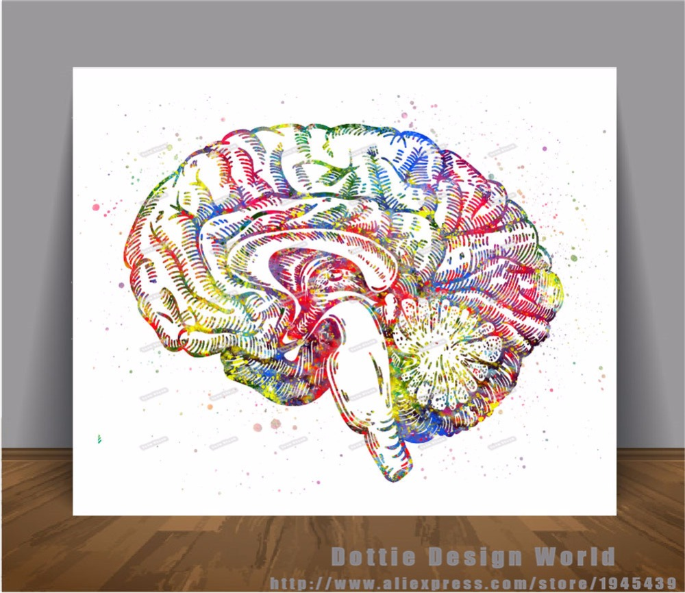Aliexpress.com : Buy Human Brain Anatomy print Watercolor Canvas ...