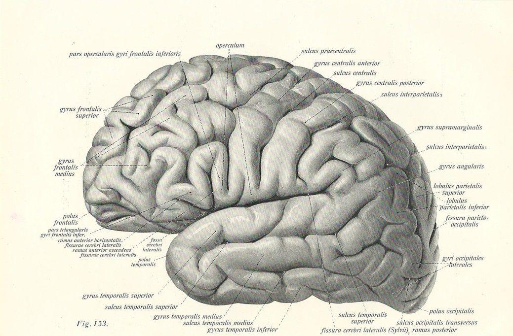 Vintage 1800\'s Human Brain Chirurgische Anatomie Stof poster 20 \