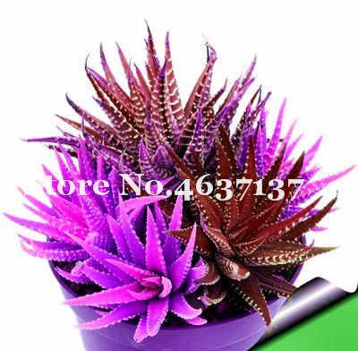 Venda! 50 pçs/saco Aloe Vera Misturado Flores Bonsai, Plantas de Ervas Raras Plante Árvore Para Casa E Jardim Diy, beleza comestível Uso Cosmético