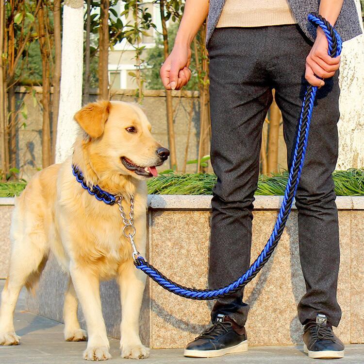 laisse corde nylon pour chien
