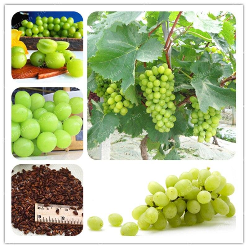 50 шт./упак. зеленый виноград бонсай сладкий и вкусные фрукты плодоношения бонсай вилла виноград Органических Фруктов Бонсай завод для сада