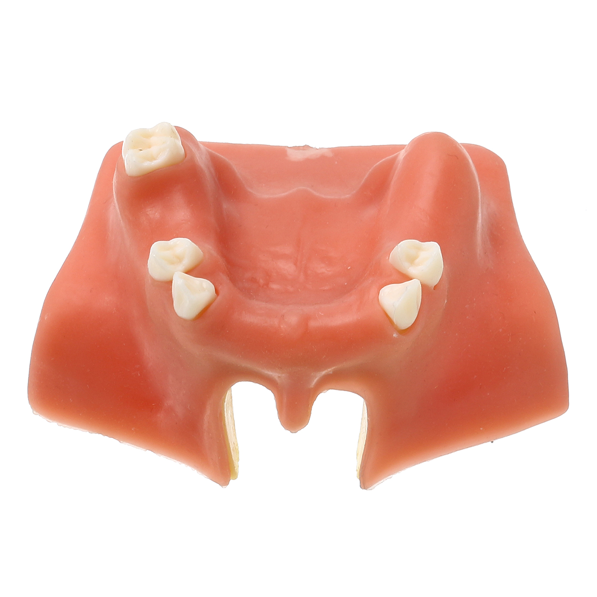 Resin Maxillary Teeth Model Upper Jaw Sinus Lift Implants Restoration Dental Practice Model For Medical Teach Study Demostration hot teeth development models teeth and jaw development model dental teeth models