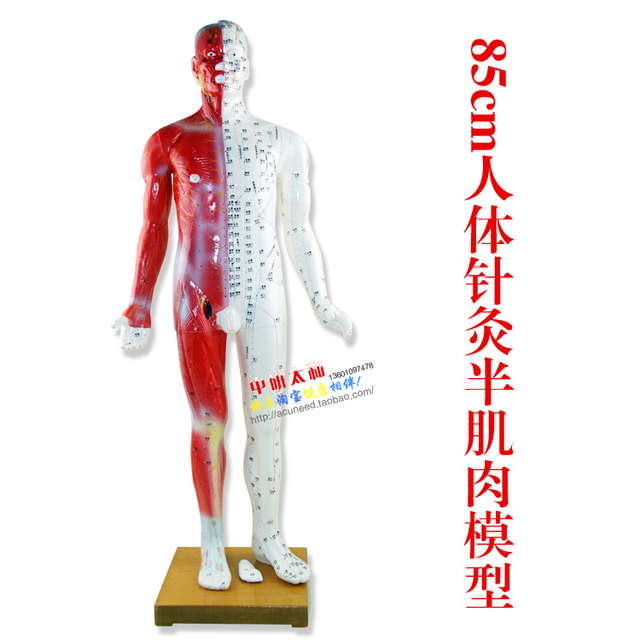 85cm Male Human Acupuncture Pointsmuscle Model Acupuncture Point