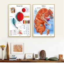 Human Organs Anatomy Chart Canvas Prints Modern Painting Posters Wall Art Pictures For Living Room Decoration No Frame
