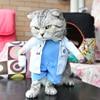 Cat Doctors Clothing