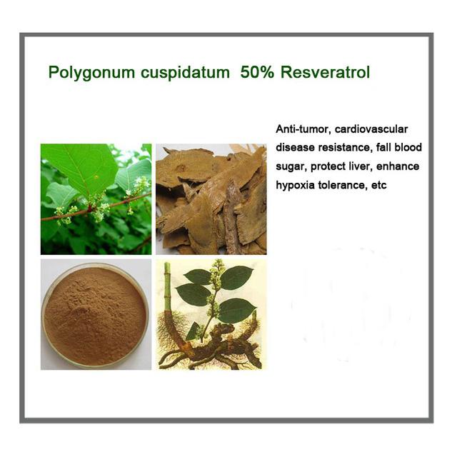 Frete grátis Natural Polygonum cuspidatum pó do extrato 50% Resveratrol 100 g/saco aumentar a imunidade