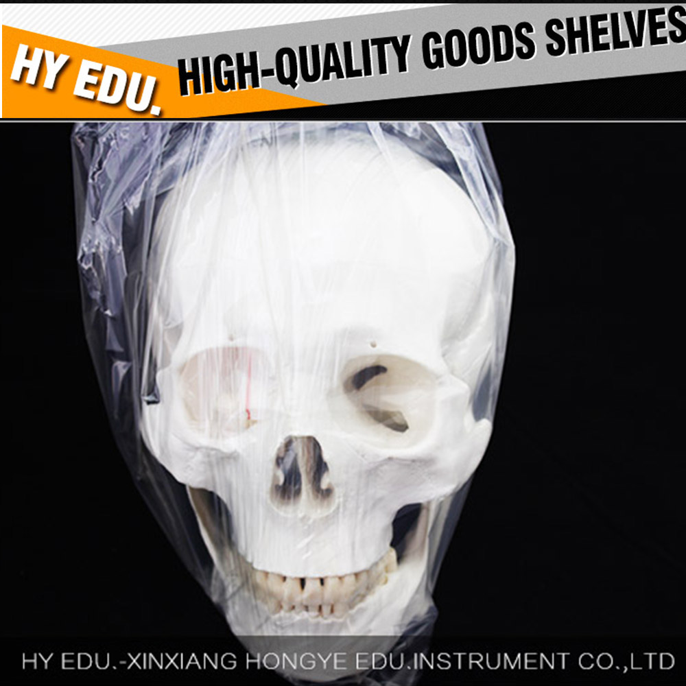 Anatomy Life size 3 parts human skull model with 3 teeth removable ...