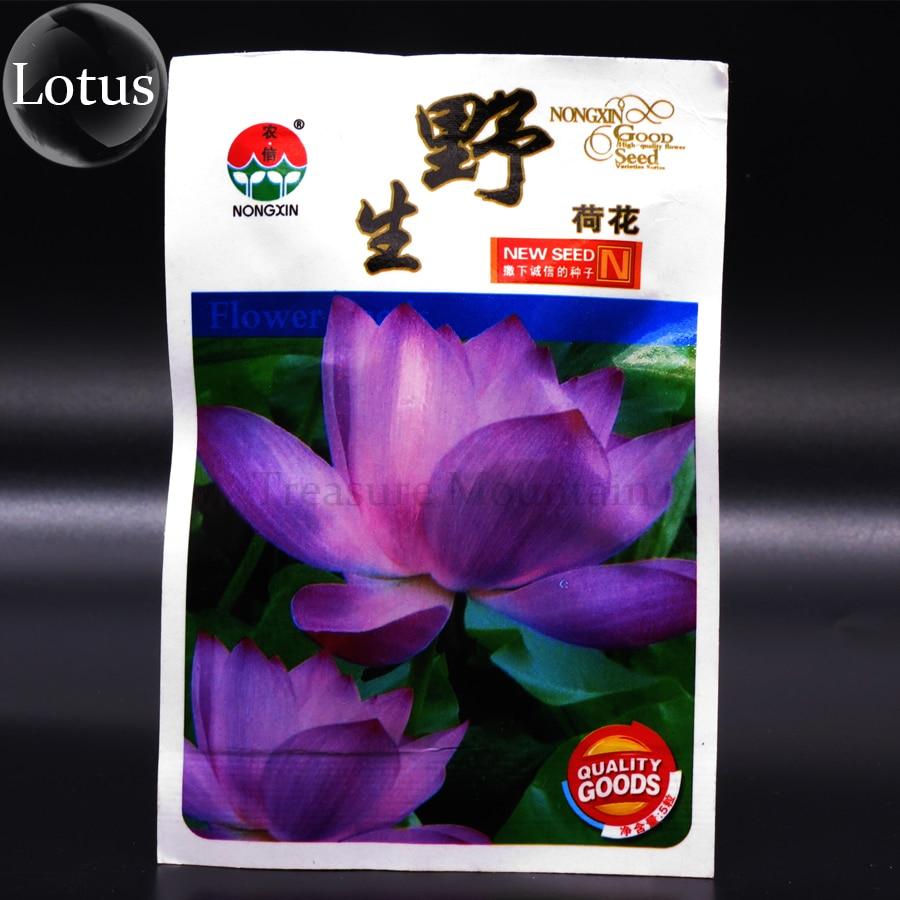 Purple lotus flower promotion shop for promotional purple lotus heirloom wild red purple lotus flower seeds original pack 5 seeds dhlflorist Gallery