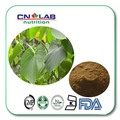 GMP Certified Factory Supply Natural Kava Powder Extract 1kg free shipping