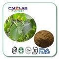 GMP Fuente de la Fábrica Certificada Natural Extracto de Kava En Polvo 1 kg envío libre