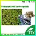 Pure Natural Cápsulas de Forskolin (Coleus Forskohlii Extrato) cápsulas de 500 mg * 100 pcs