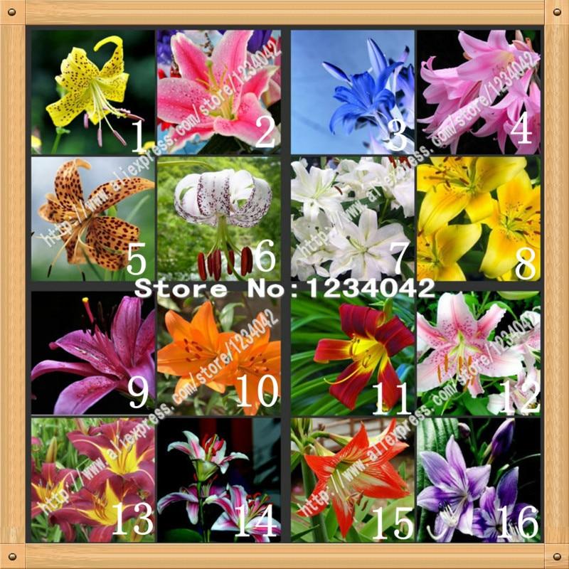 200 PC Senior Perfume Lily Seed, 24 varieties Garden Pl