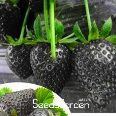 Loss Promotion!100 Seeds/Pack Fruit Seeds Black Strawberry Seeds Bonsai Plants For Home & Garden Pot Garden Strawberries,#2KKLCF