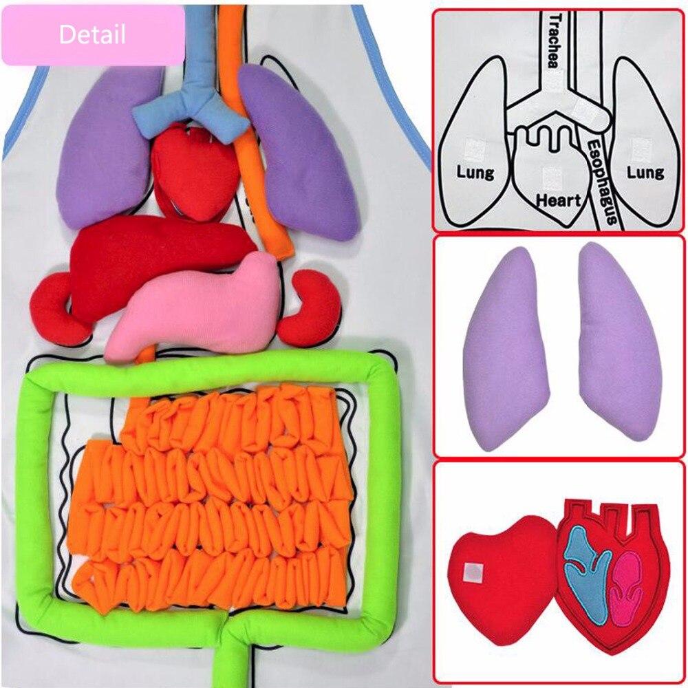 Diseño Creativo educación Enseñanza simulación órganos humanos ...