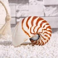 13-15 см натуральный жемчужный четыре большой известный винт Nautilus раковины моллюсков коралловые коллекционные средиземноморские Декорации ...