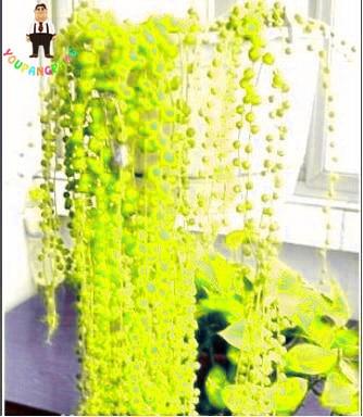Vendita calda 100 pz/borsa Arcobaleno Perla Chlorophytum bonsai Perline Giardino Succulentas Bonsai In Vaso di Purificazione Dell'aria Interna