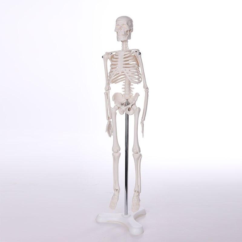 BIX-A1001 squelette humain anatomique modèle (180 cm) WBW395