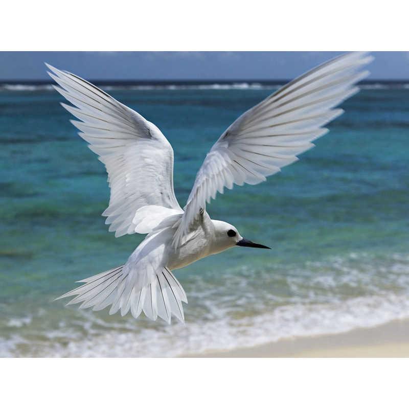 Морской Белый голубь, вышивки крестом алмазов вышитое домашнее украшение алмазная живопись 5D «сделай сам» поделки картины из страз подарки