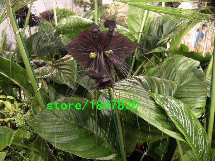 горшки для орхидей с доставкой в Россию